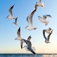 אילו ציפורים