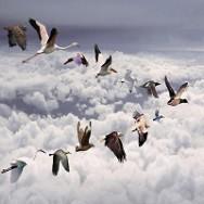 כל הציפורים